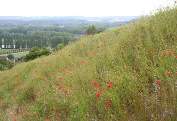 Mont César_M. Moeys  CEN Picardie