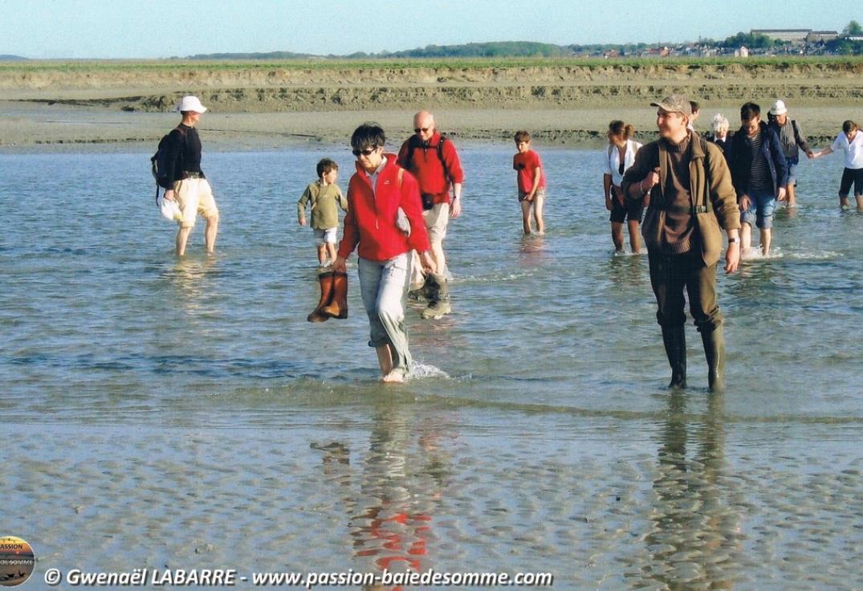 Sortie Nature en Baie avec Passion Baie de Somme