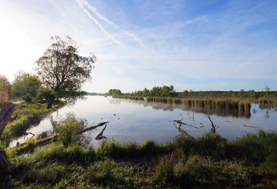 Marais de Sacy