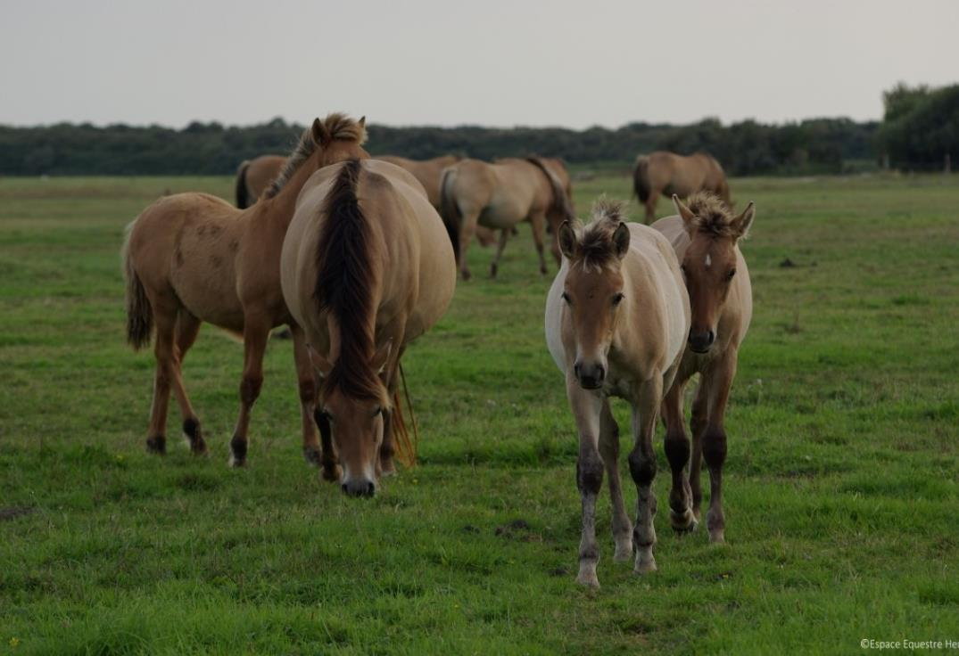 espace_equestre_fort_mahon_somme_picardie2