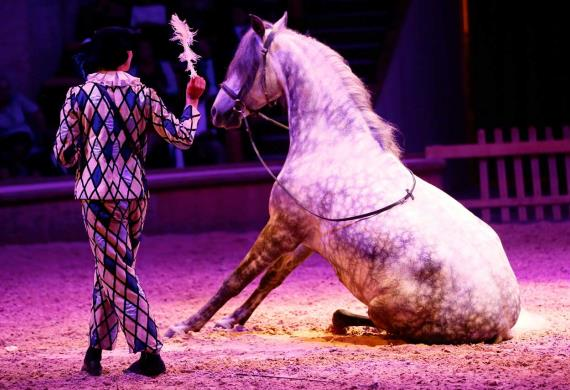Cheval-reve-Copyright-RB-Presse