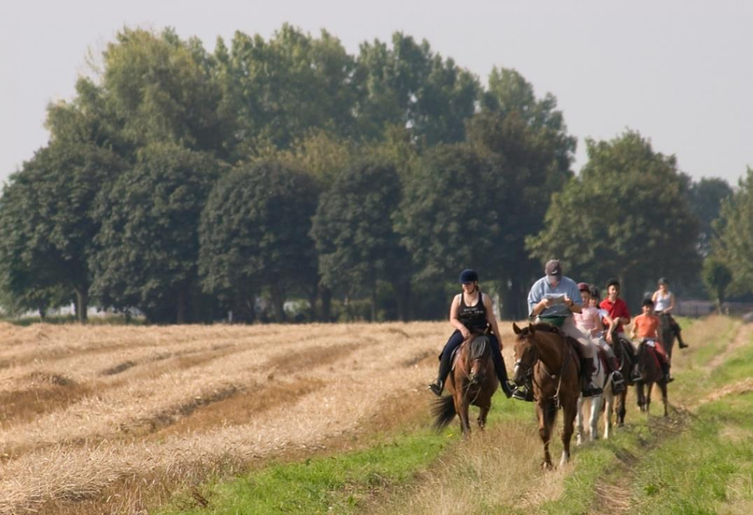 chevaux_naours_picardie_somme