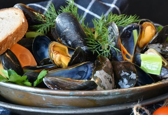 mussels-3148439-960-720-3